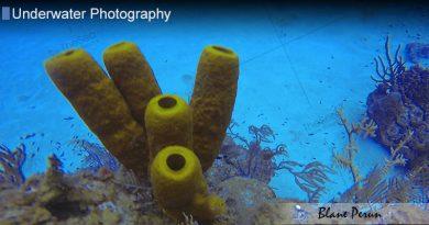 Cayman Dive 7/13′