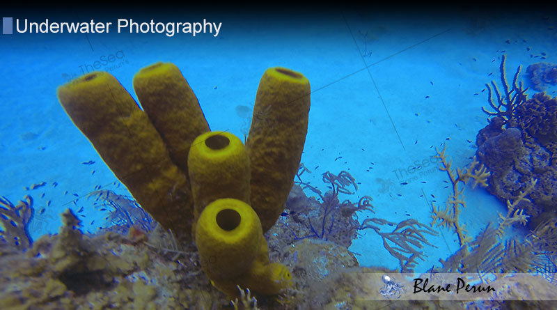 Cayman Islands coral reef from Blane Peruns TheSea