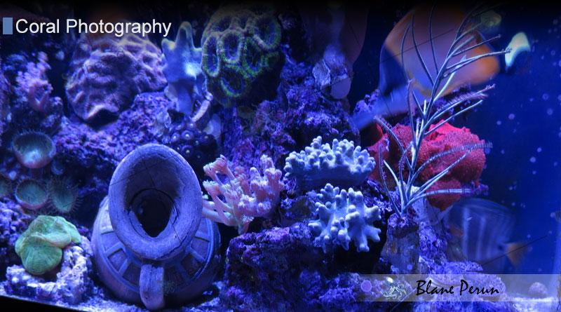 Blane Perun's Farms of TheSea 55 Gallon Reef  Tank