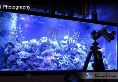 55 Gallon Reef