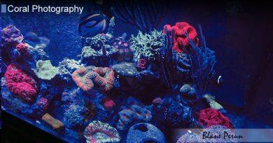 75 Gallon Reef Tank 2016