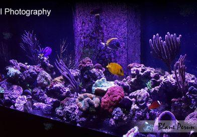 75 Gallon Reef