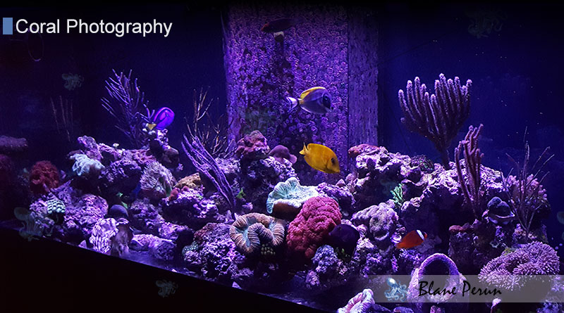 75 Gallon Reef  Tank 16'-17'