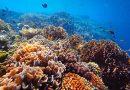 Top Snorkel Sites