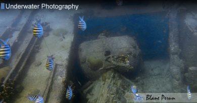 Barbados Dive 11/17′