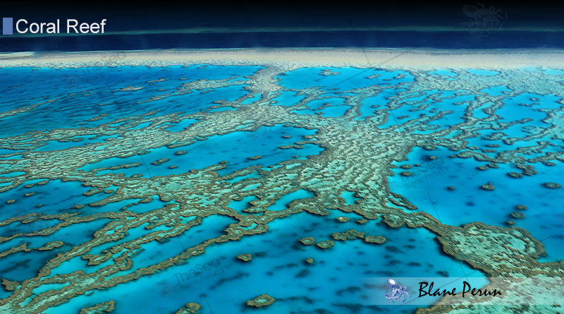 Barrier Reefs and more about coral reef types