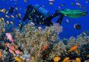 #1 Bonaire, Best Coral Reef Islands
