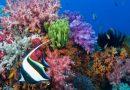#5 Boracay Islands, Best Coral Reef Islands