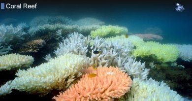 Can Coral Reefs Recover From Bleaching