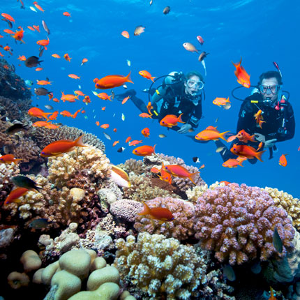 Cayman Number 7 Coral Reef Island from Blane Peruns TheSea