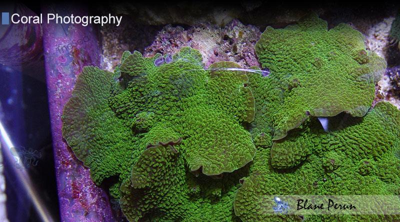 Blane Perun's Farms of TheSea Coral Farm