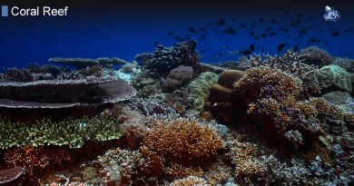 Coral Reef from Blane Peruns TheSea