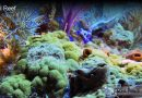 Coral Reef Definition