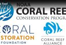 Coral Reef Conservation Groups