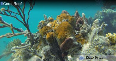 Why Are Coral Reefs Dying Off