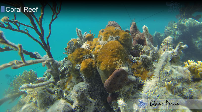 Coral Reef Dying from Blane Peruns TheSea