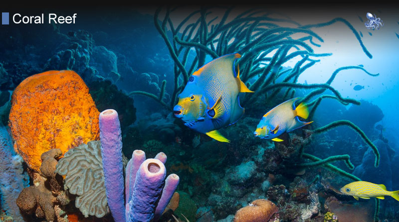 Coral Reef Ecosystem and more about coral reef