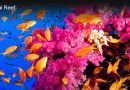Coral Reef Ecosystems Support Over A Million Different Species