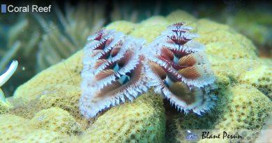 Coral Reef Plants