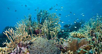 Coral Species