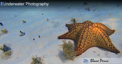 Cozumel Dive 1/06′