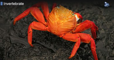 All Crustaceans Have an Exoskeleton