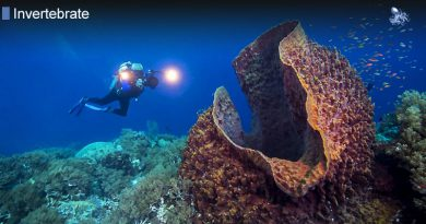 Deep Water Sponges Can Live Over 200 Years from Blane Peruns TheSea