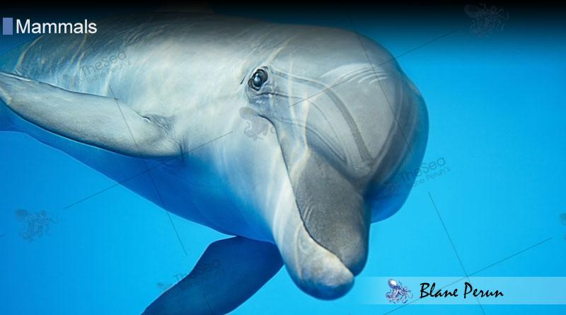 Dolphins Sleep with One Eye Open