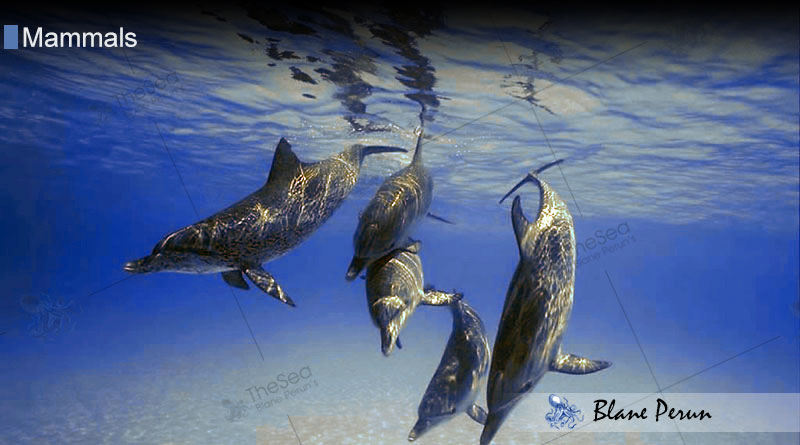 Dolphins from Blane Peruns TheSea.Org
