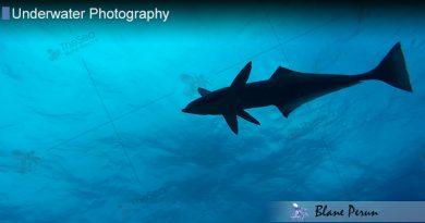 Freeport Dive 6/17′