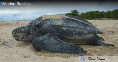 Giant Sea Turtle Facts