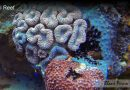 How Does Algae Help The Coral Reef