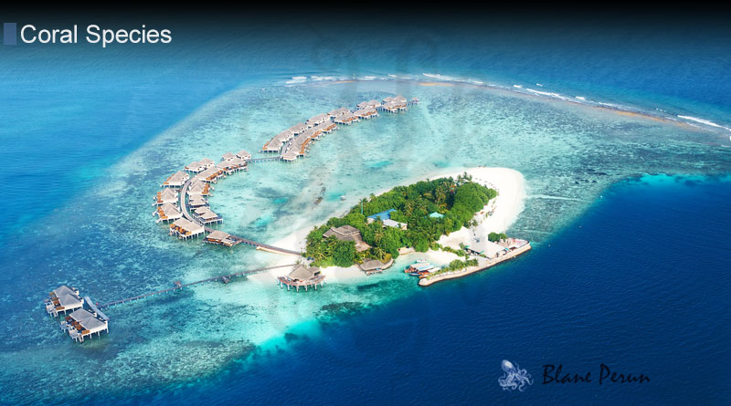 How Do Coral Atolls Form from Blane Peruns TheSea.Org