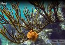 How Do Coral Reefs Work