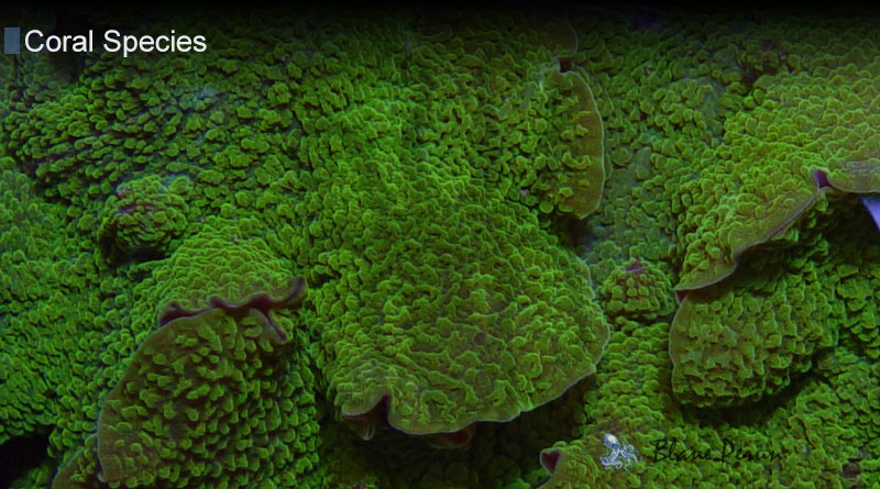 How Fast Does Coral Grow from Blane Peruns TheSea.Org
