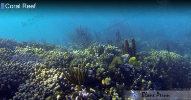How Have Coral Reefs Changed Over Time