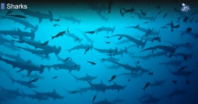 How Many Species of Sharks Are There