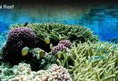 Importance Of Coral Reefs In The Marine Ecosystem
