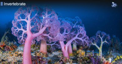 Invertebrates 97 Percent Of Species from Blane Peruns TheSea
