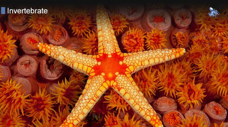 Marine Invertebrates from Blane Peruns TheSea