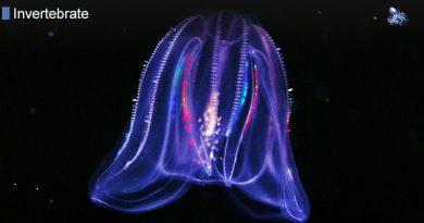 Invertebrates Change as They Grow