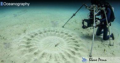 Japanese Puffer & Underwater Circles