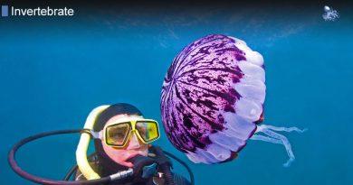 Jellyfish No Brains Bones Heart or Eyes