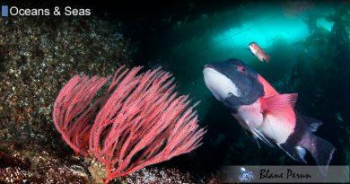 Kelp Forest Animals