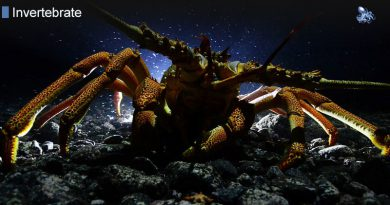 Lobsters Can Live As Long As 100 Years