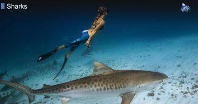 Lifespan of a Shark
