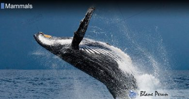 Marine Mammals Use 75% of Their Lungs We 10%