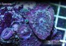 Mushroom Coral Care