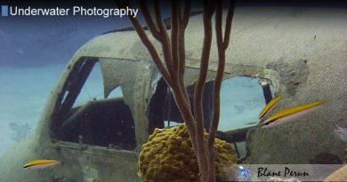 Nassau Dive 11/04′