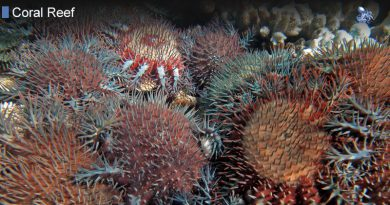 Natural Threats To The Coral Reef